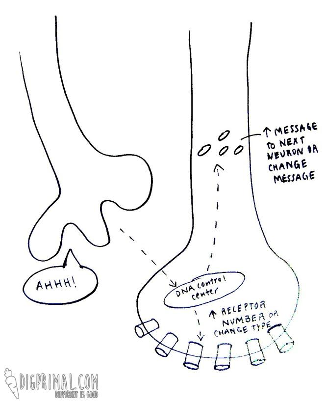 receptor upregulation